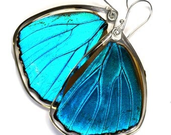 Real Butterfly earrings, Blue Morpho Menelaus, hind wings, earrings