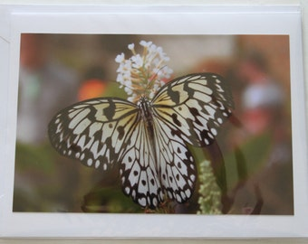 Butterfly Blank Photo Note Card