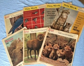 1960s Picture Magazines From Sunday Minneapolis Tribunes Seven Issues  Animal Lovers Ourdoorsman