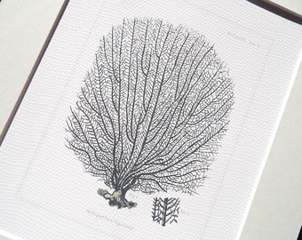 Grey Sea Coral Fan 3 Naturalist Collection Archival Print on Watercolor Paper