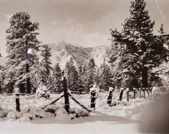 Original Antique Photograph Winter Wonderland