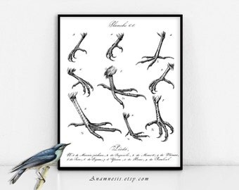 BIRD FEET COLLAGE - digital download - printable 1800's French illustration retooled for image transfer - totes, pillows, prints, fabric