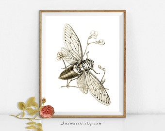 HONEY BEE - digital download - printable antique insect illustration retooled for image transfer to totes, pillows, prints, clothes etc.
