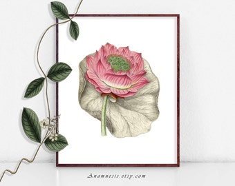 LOTUS BLOSSOM - digital image download - printable antique flower illustration retooled for prints, totes, scarves, fabric, pillows etc.