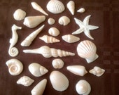 Gum Paste SEASHELLS Kit No. 4,  25 PC   - Cake Topper and Cupcake  Decorations
