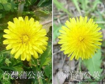 Miniature Flower Mold MOU6550