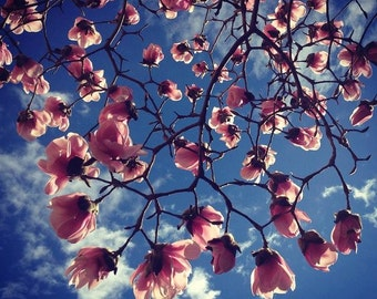 Magnolia Tree - Wall Art, Home Decor, Magnolia, Spring, Vancouver, British Columbia