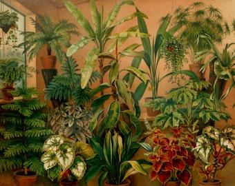 1897 Antique fine lithograph of HOUSEPLANTS. Ornamental Plants. Garden Plants. Flowering Plants. 119 years old gorgeous print.