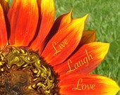 Live Laugh Love Twirled Sunflower 8x10 or 16x20 Professional Print Fine Art Photography Nature Print