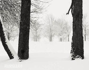 Clearance Sale - Winter photography, snow photograph, nature, landscape, decor, black and white - Snow's Enchantment