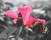 Fine Art Butterfly Photography Digital Download Whimsy Nature Flower Black and White Pink Red Woodland Decor Nature Printable Art Photo