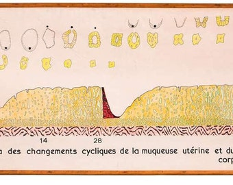 Vintage Belgian Hand-Drawn School Chart