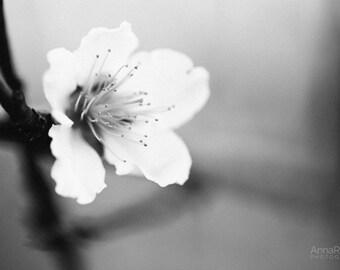 Peach Tree Blossoms Etsy