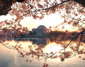 Cherry Blossom Photography Washington DC Photography Print Orange Pink Red Cherry Blossom Festival Flower Sunset 8x10 Photo Tidal Basin