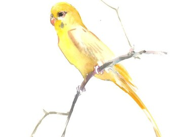 Yellow Parakeet, original watercolor painting, 9 X 12 in, yellow bird art, pets