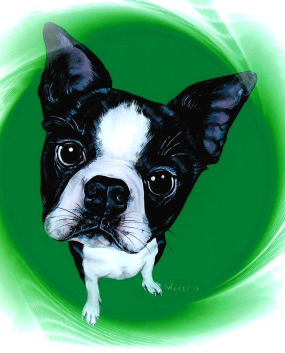 Boston Terrier Boston Terrier Art Boston Terrier By Artbyweeze