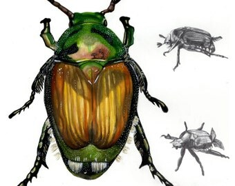 Insect - Japanese Beetle
