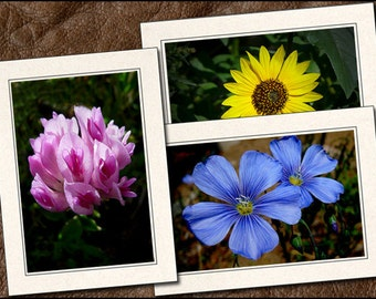 3 Wildflower Photo Note Cards - Flower Note Cards - 5x7 Flower Cards - Blank Wildflower Note Cards - Wildflower Greeting Cards (FL3)