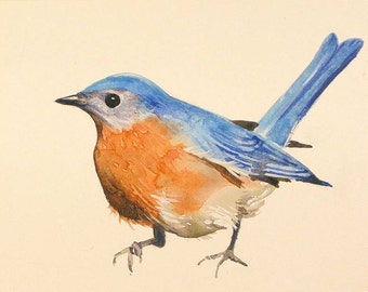 Bluebird paintings eastern bluebird watercolors bluebird prints bird art bluebird art blue and orange