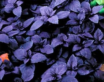 Organic Purple Basil Seeds~ Dark Opal ~Mycorrhizae Inoculated/Bulk Available~