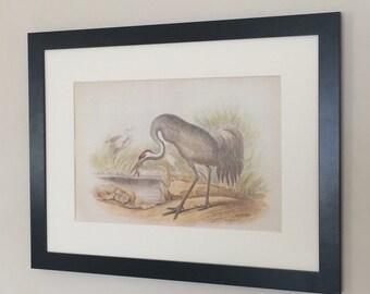 "Framed and Mounted Crane Bird Print 16"" x 12"""