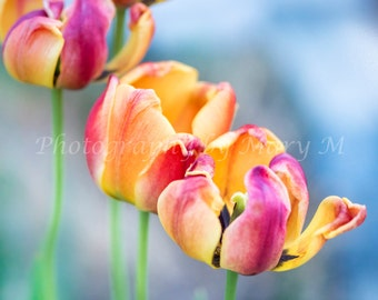 Floral Photography, Flower Photography, Tulip ,Flower Garden, Floral, Nature Photography, Dreamy, Romantic, Home Decor, Wall Art