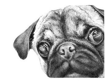 Pug Drawing Etsy