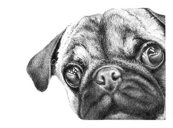 Painting Pug Black And White