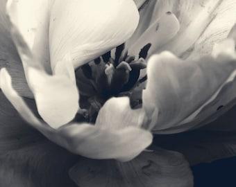 Flower Photography - 8x10 White Flower Monotone Print