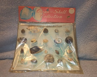 Vintage Seashell Collection