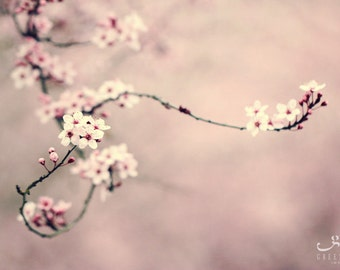 Curling Plum Branch - Photo Print, flower photography, spring, botanical, pink, Asian style, photo gifts