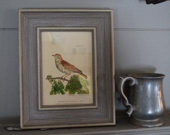 One beautiful vintage bird picture