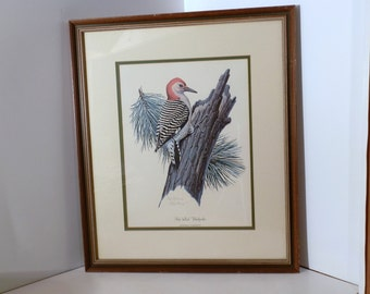 Vintage Framed Red-bellied Woodpecker Print by Don Richard Eckelberry