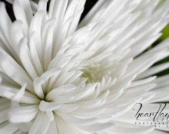 White Macro Flower, Macro Photography, Flower Close Up, Spider Mum, Neutral Print, Nursery Decor, Bedroom Wall Art, Fine Art Photography