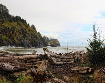 Cape Dissapointment State Park, Lewis and Clark, Driftwood, Pacific Coast, Ilwaco, Washington