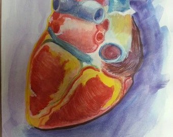"""Watercolor Study of the Posterior Heart 