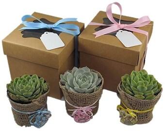 12 Succulent Party Favors-Succulent Baby Shower Favors-Gender Reveal Favors-DIY Succulent Kits-Burlap Baby Shower Favor-12 Plant Kits