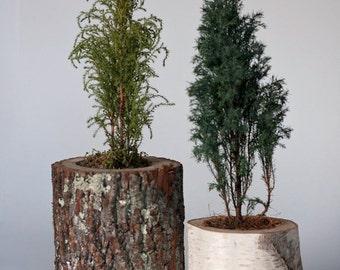 Tree branch planters.