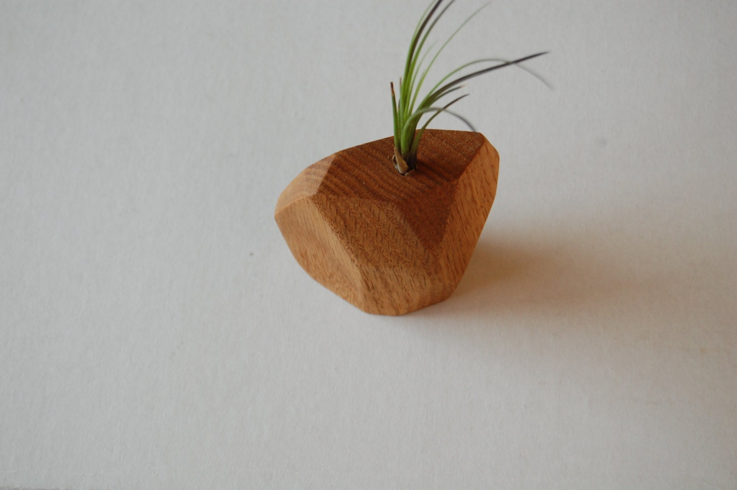 Air plant holder geometric air plant holder by mossandmeadow for Geometric air plant holder