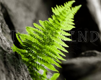 Ferns, Color Photography, Green, Stone, Art, Nature