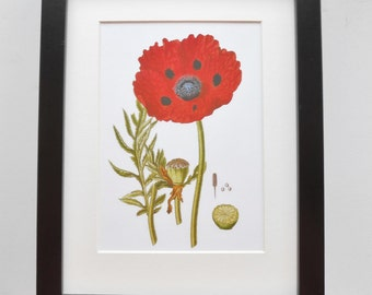 253 - Print with frame, Home decor, Wall hanging, Botanical art, Botanical print, Flower print, Poppy print, Botanical decor, Print gift