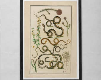 VINTAGE NATURE PRINT- Antique Serpent Print - Professional Reproduction - Antique Snake and Fauna Print Nature Wall Art Nature Art Print