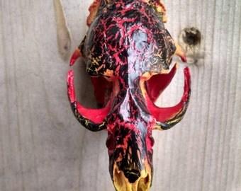 Magma painted muskrat skull