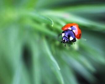 "Photo ""Ladybug"""