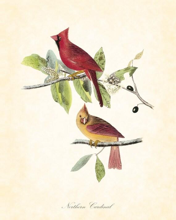 Items Similar To Vintage Northern Cardinal Audubon Bird