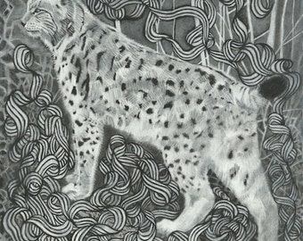 "Cat Art Illustration - Bobcat Drawing Wildcat Black & White Charcoal Art Print - ""Lola"""