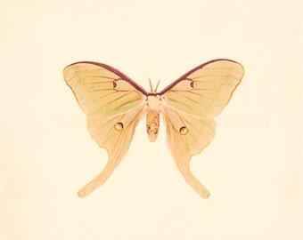 Butterfly Photography, sage, nursery, nature art prints, yellow, girls room, feminine, wings, garden, wall decor, minimalist, playroom