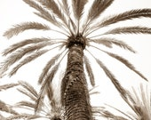 Palm Tree Fine Art Print - Sepia Photography - Palm Tree Wall Decor - Large Photography Wall Art - FREE SHIPPING