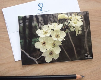 flowers photo card, botanical note card set, white tree blossoms photography note cards