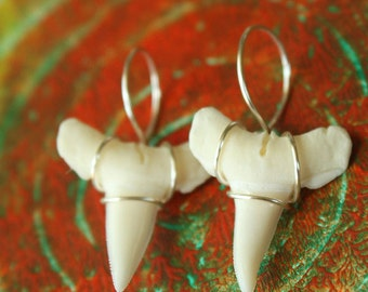 """Matched Pair of Wire Wrapped White Shark Teeth - 3/4""""  Teeth in Creamy White ready to be cute little earrings - 2-34W"""